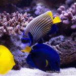 I Valori dell'acqua di un acquario marino tropicale