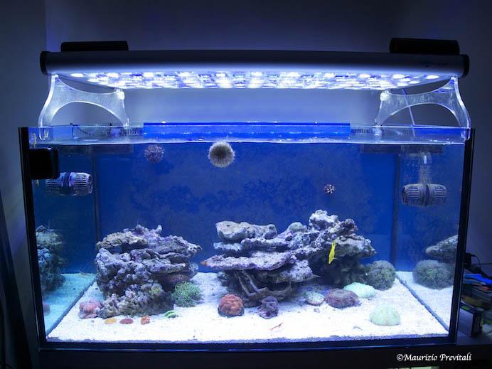 Plafoniera Led Acquario : Illuminazione led negli acquari marini iris